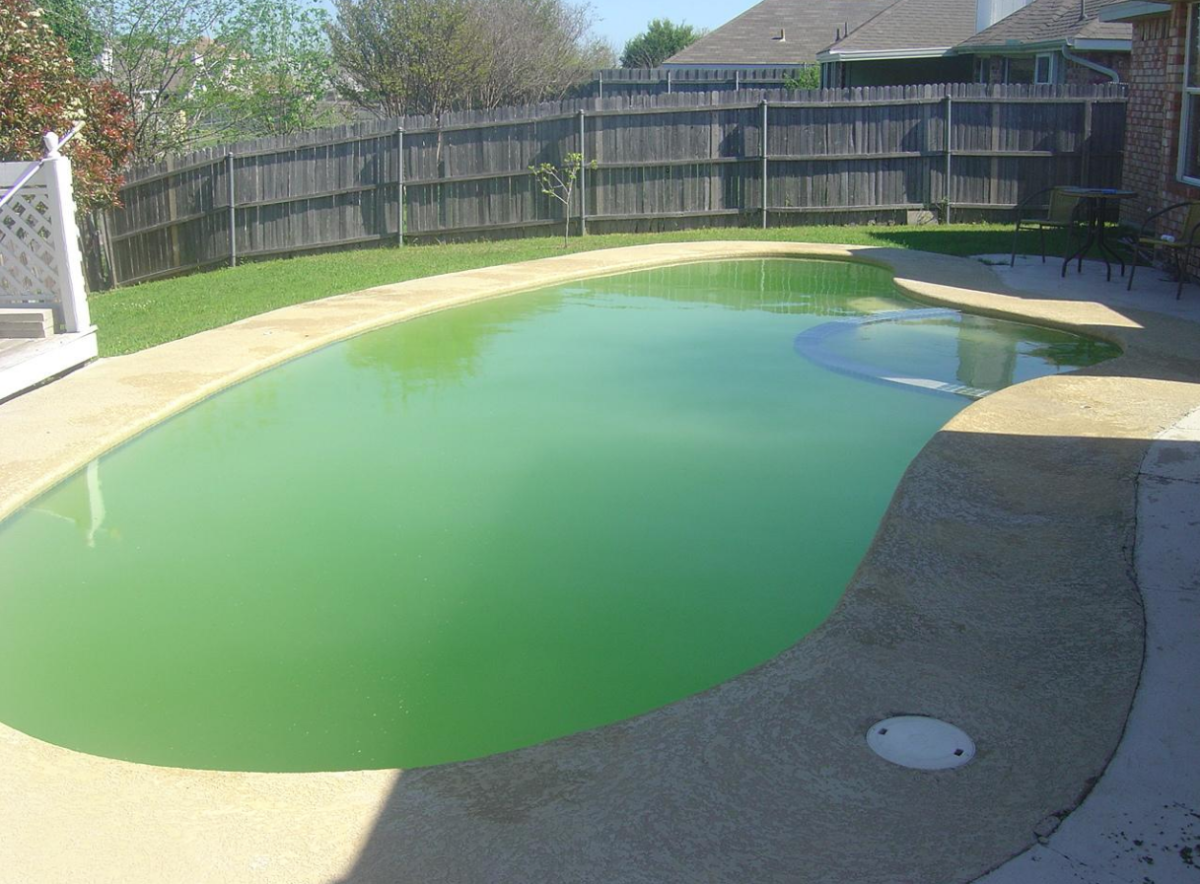 pool algae removal